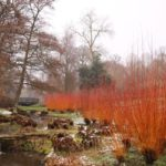 Dogwood in Winter by Pat Svanberg
