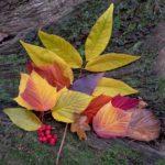 Autumn Colours by Jacqui Sturgeon