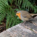 Robin On A Bench by Jacqui Sturgeon