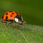 Highly Commended – Ladybird by Lesley Taylor