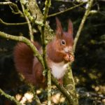 3rd – Red Squirrel by Sally Seager