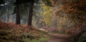 Into Autumn by Kathryn Graham