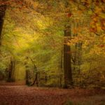 Path into Autumn by Kathryn Graham