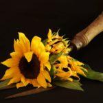 Sunflowers in Autumn by Pat Svanberg