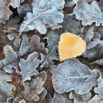 First Frost by John Sturgeon