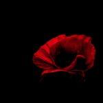 Poppy by Kathryn Graham