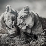 Sisters by Lesley Taylor
