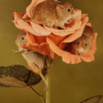 Three Little Harvest Mice by Sally Seager