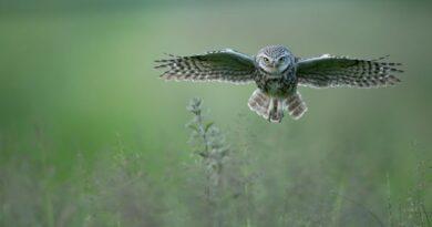Low Level Flying by Paul Whitbread