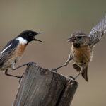 Get off my Post by Ian Newell