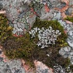 Moss and Lichen by Vivien Smith