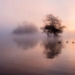 Misty Sunrise at Richmond Park by Linda Kent