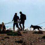 Walking the Dogs by John Fletcher