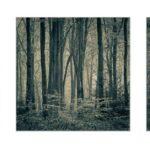 Woodland Vistas by Kathryn Graham