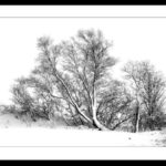 Trees in Snow by Vivien Smith
