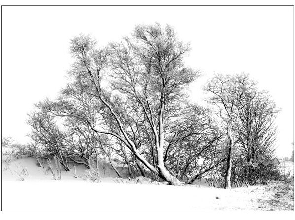 middle image from trees in snow panel by Vivien Smith
